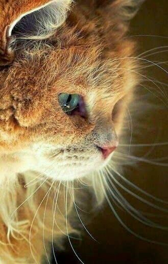 Pin By Kathryn Reeder On Kedi Cats Pretty Cats Pets