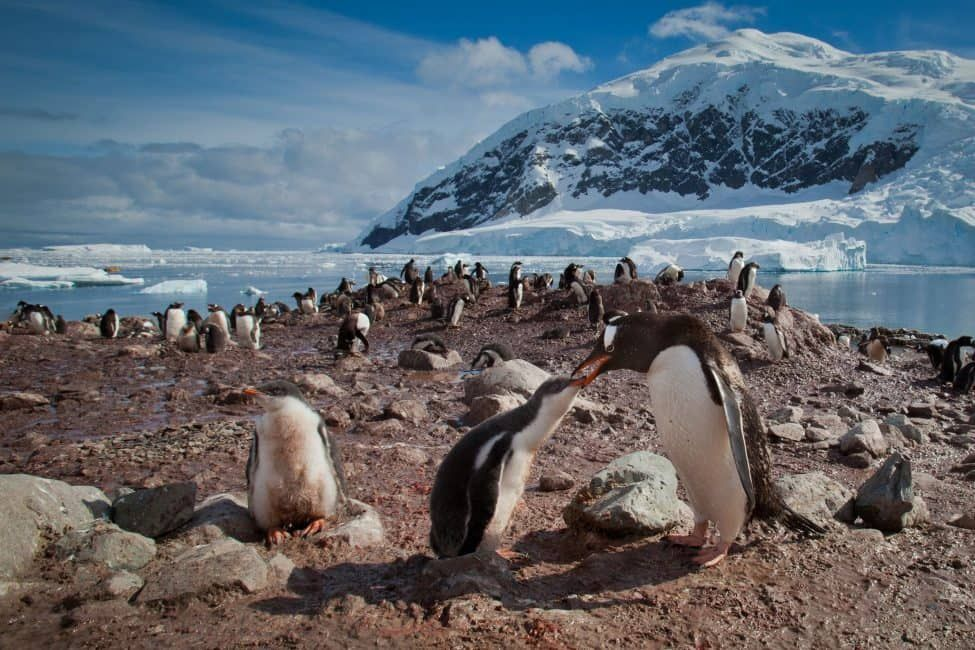 The Ultimate Antarctica Travel Guide (Updated 2019