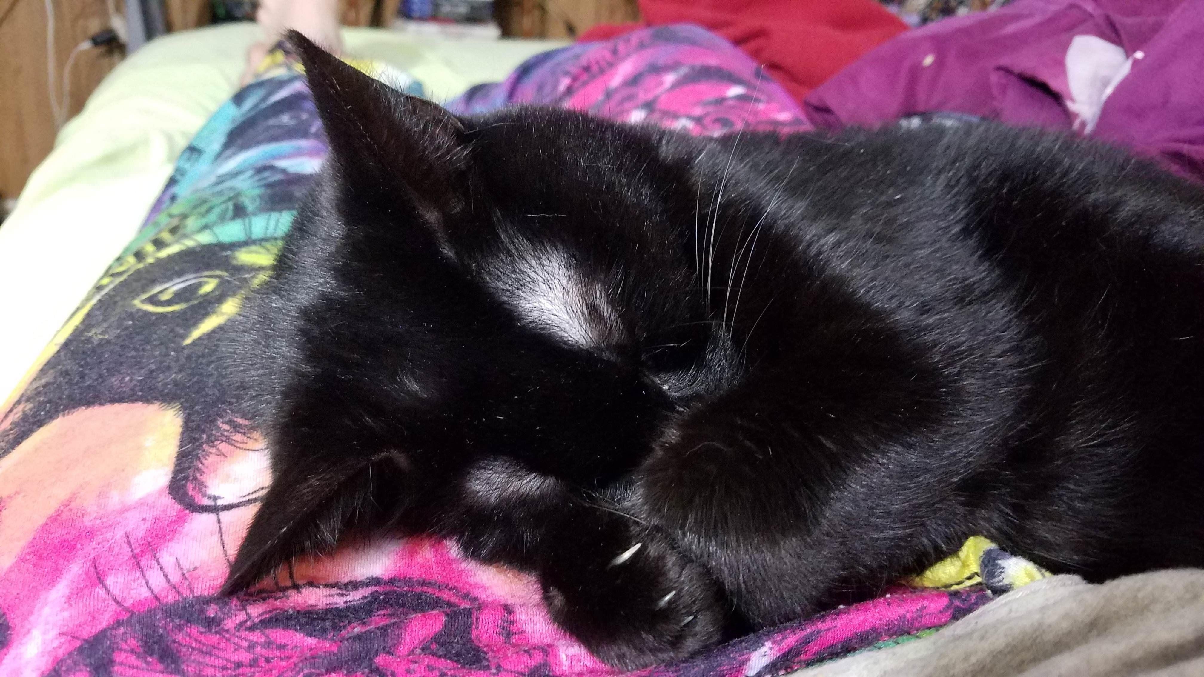My Cat Sleeping On My Cat Pajamas