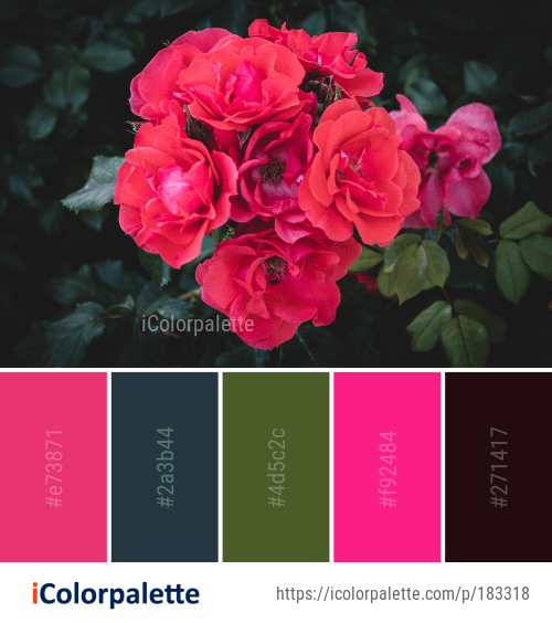 Color Palette Ideas From Flower Rose Family Image Color Palette Colorful Flowers Color