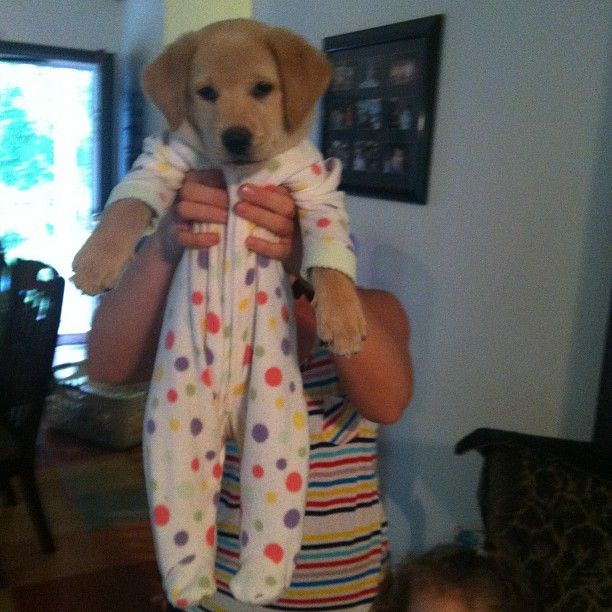 a puppy in footy pajamas. i can't even handle this right now