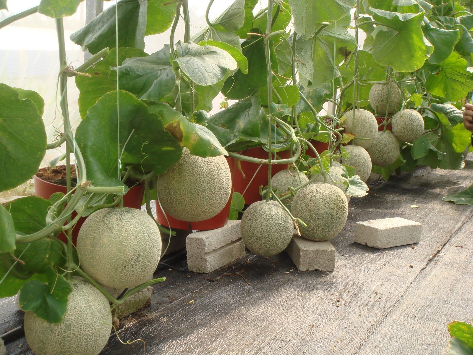 Homemade Hydroponic System Google Search Pinteres