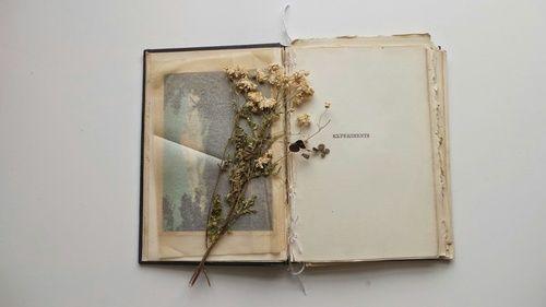 Imagem de book, flowers, and tumblr