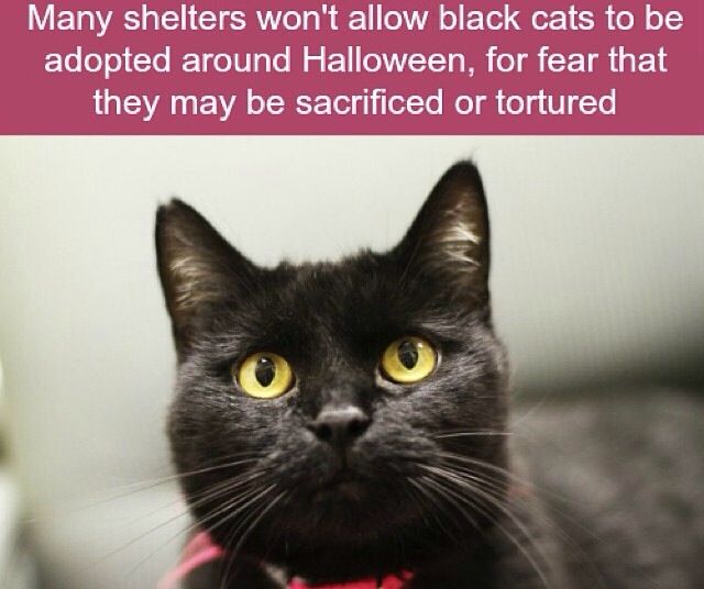 My black cat is my love❤️ how could anyone dare to hurt these beautiful creatures!!
