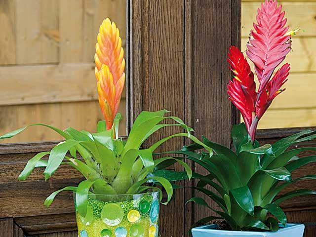 5 plantes d 39 int rieur fleuries faciles plantes d. Black Bedroom Furniture Sets. Home Design Ideas