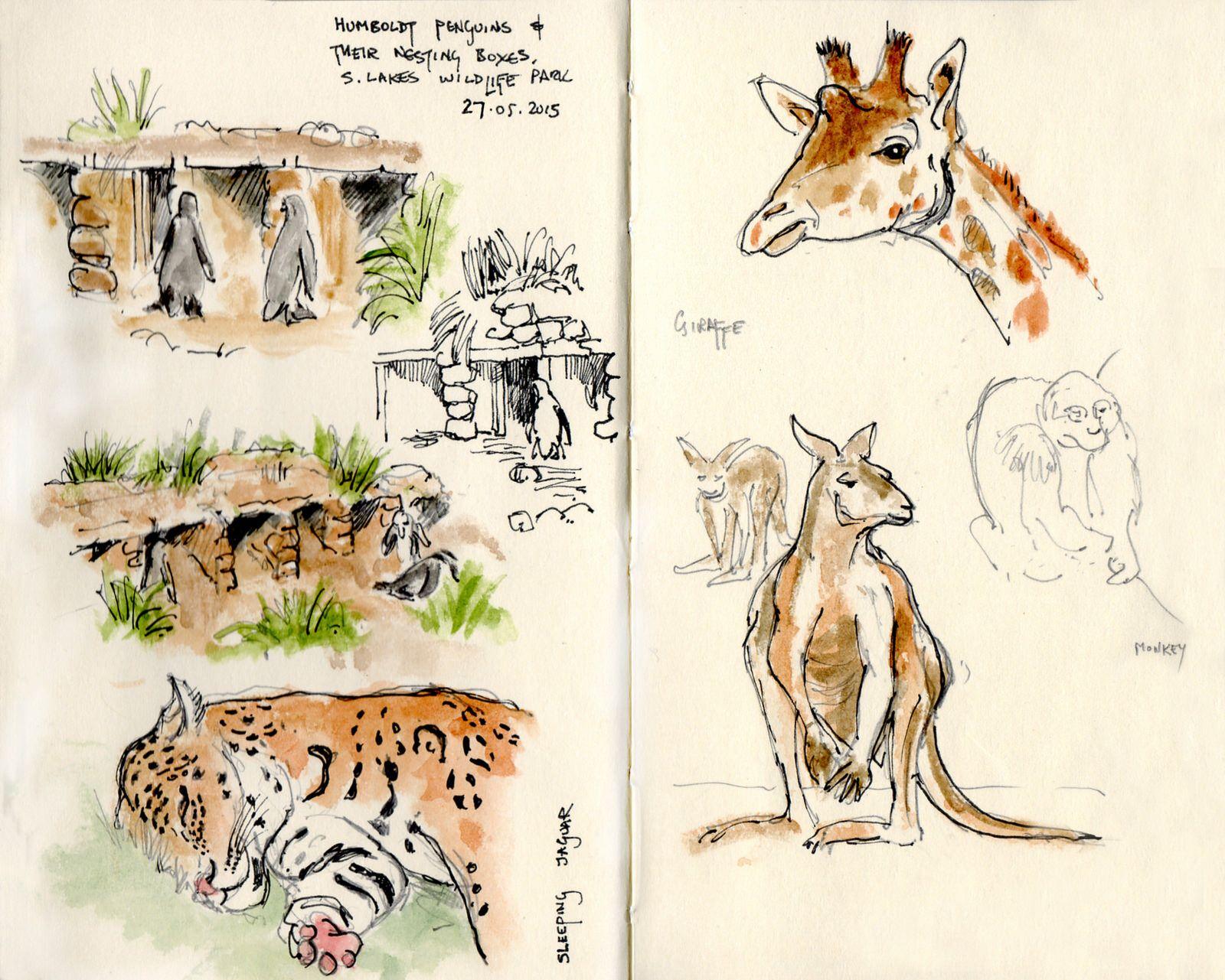 May 27th S Lakes Safari Park