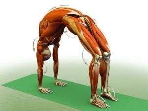 my goal pose urdhva dhanurasana with images  yoga