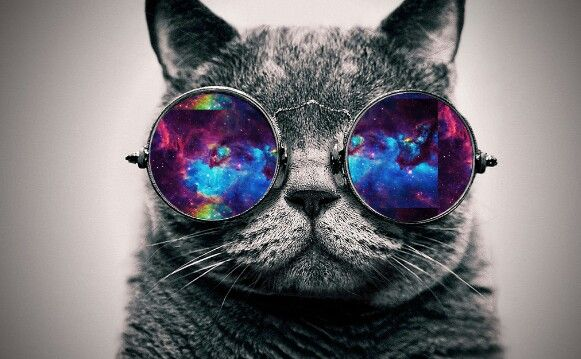 Cat galaxy glasses u go cat | galaxy animals and other ...