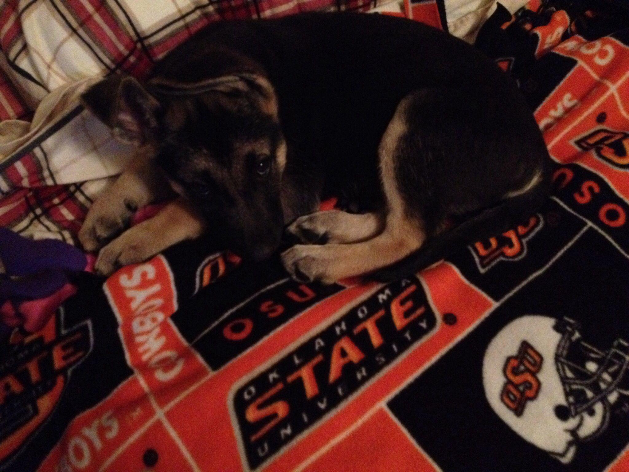 #orange #puppylove
