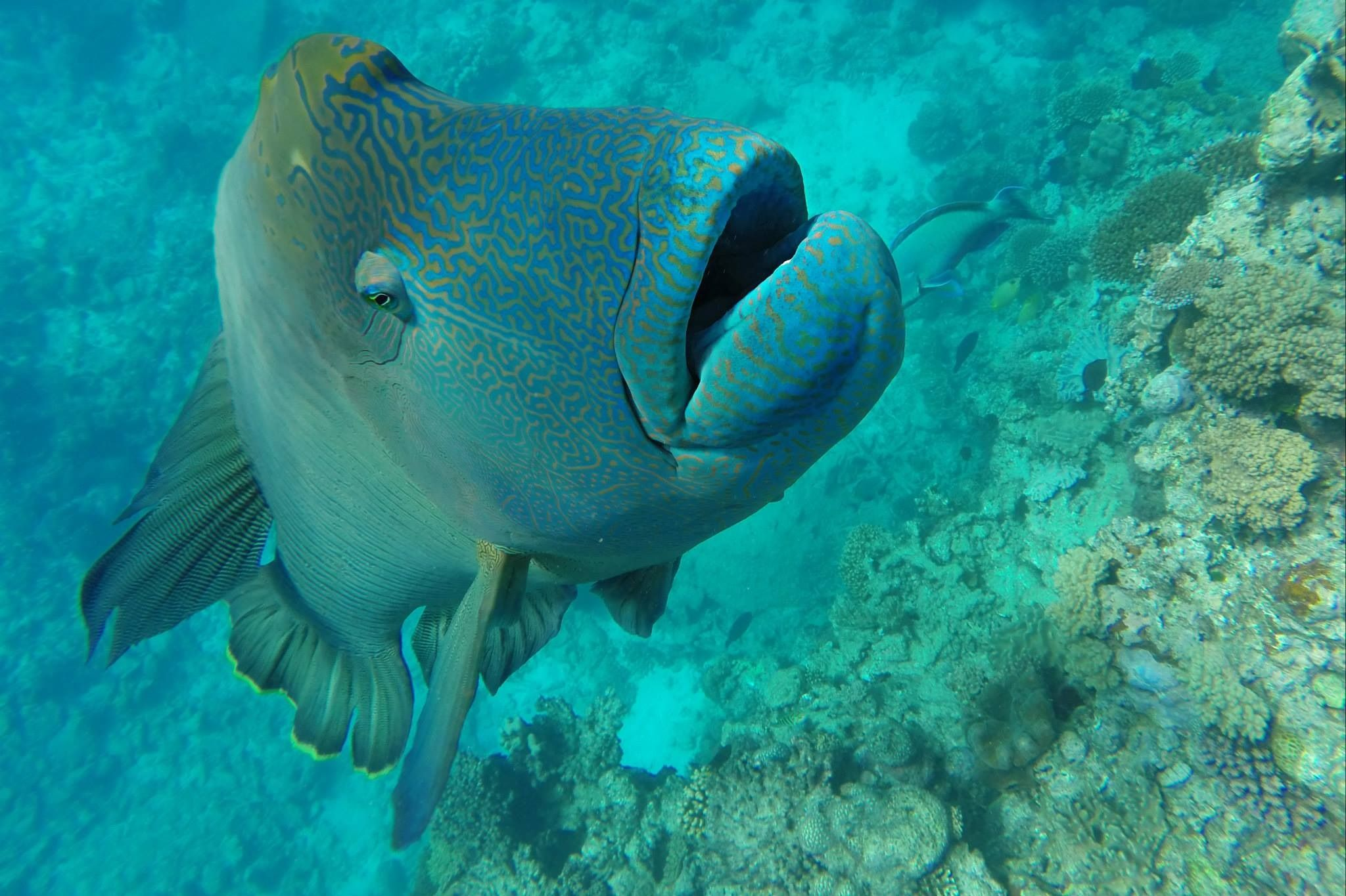 Pin by Lo on Betta | Fish pet, Great barrier reef, Animals - photo#27