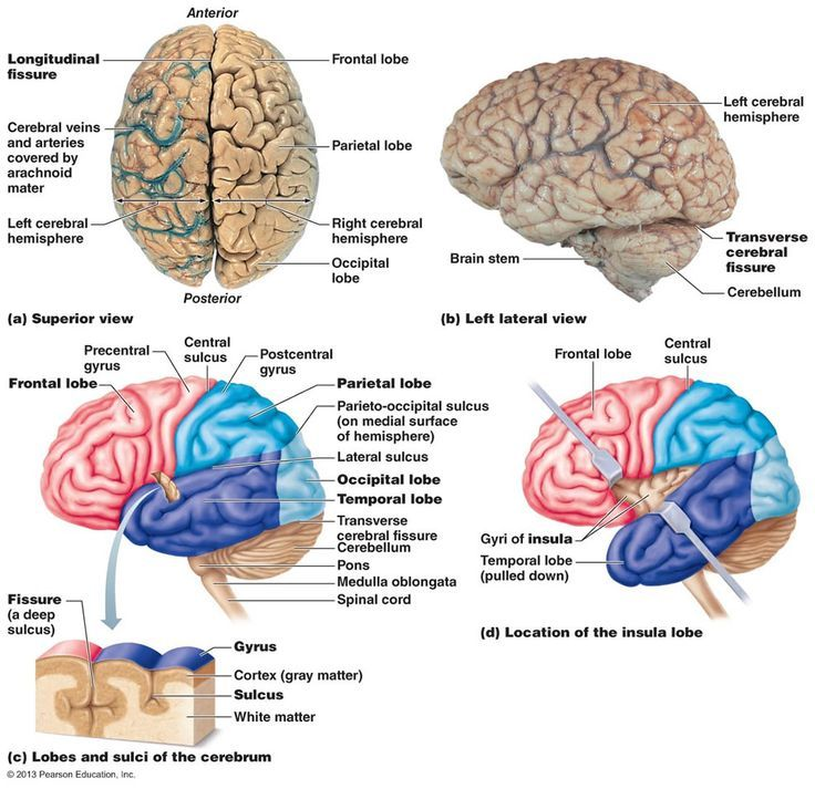 ed7499981bc150f10fcfd39a49effe13--central-nervous-system-human ...