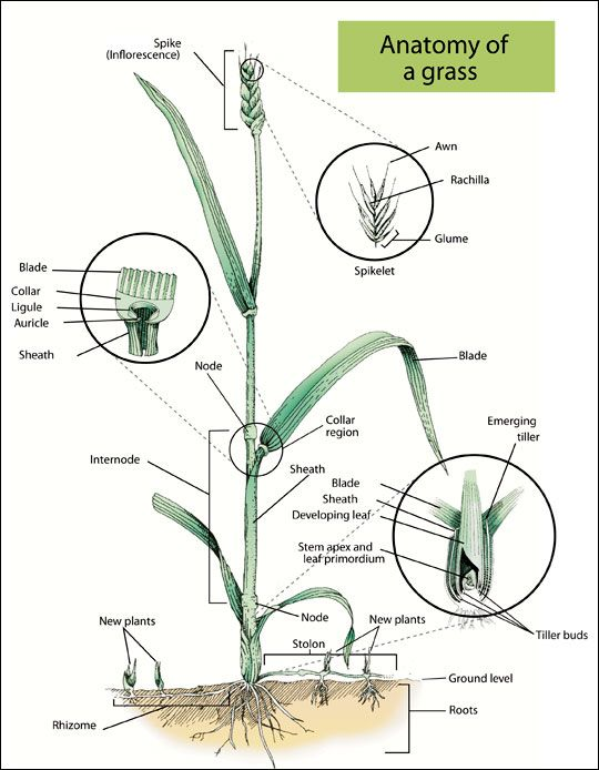 plant and its parts pdf