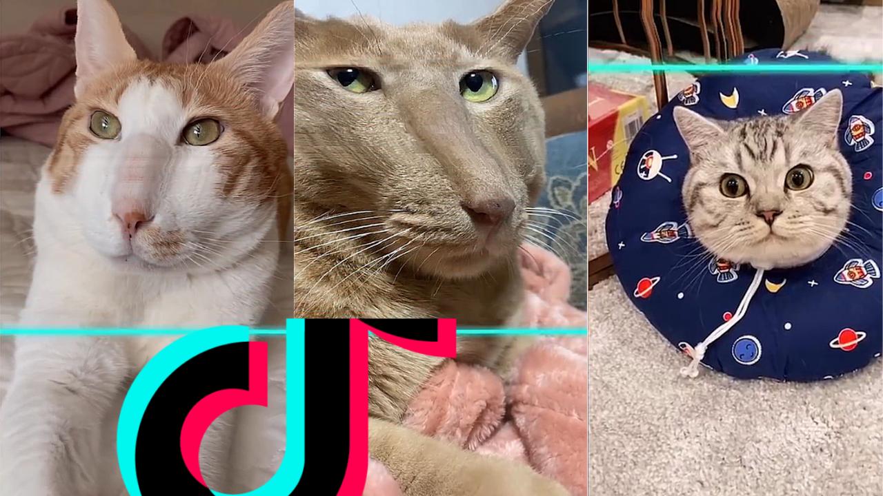 Tiktok Filter Time Warp Scan Cat Compilation 5 Best Cat Memes Cats Cat Memes