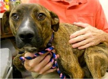 Adopt Jazz On Dog Mixes Losing A Pet Pet Life