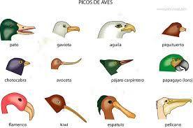 tipos de alas aves - Buscar con Google