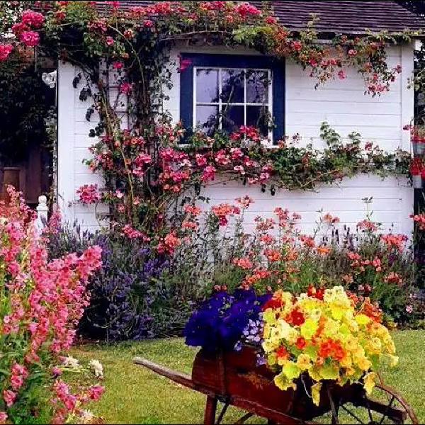 Photo of Wonderful home garden