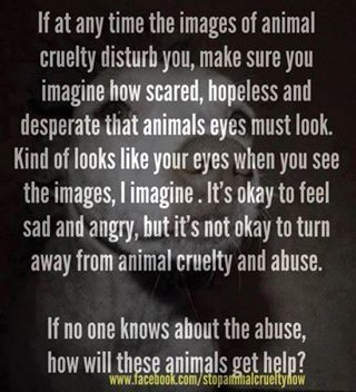 Animal Abuse The Punishment Should Fit The Crime S Photo Adopt