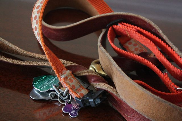 What to look for when selecting the right leash and collar for your dog.