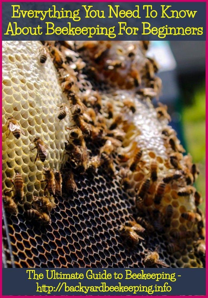honey bees restaurant karimnagar | Bee keeping, Backyard ...