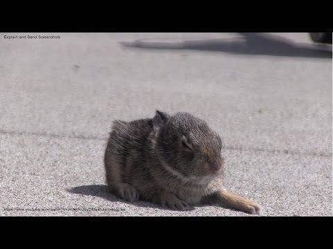 Baby Rabbit Rescued In My Yard | Cute baby bunnies, Rabbit ...