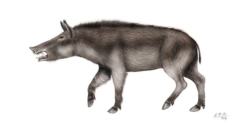 Resultado de imagen de Conohyus simorrensis