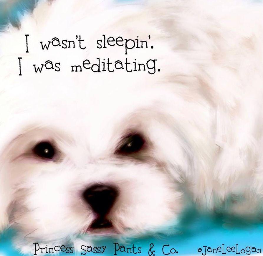 Sleeping Dog Quote Via Www Facebook Com Princesssassypantsco Dog