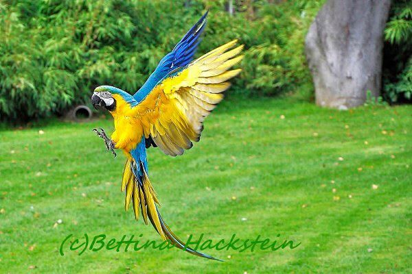 Macaw  How beautiful!!!  Makes you feel free inside... 'cause ya know that is what he/she is feeling....