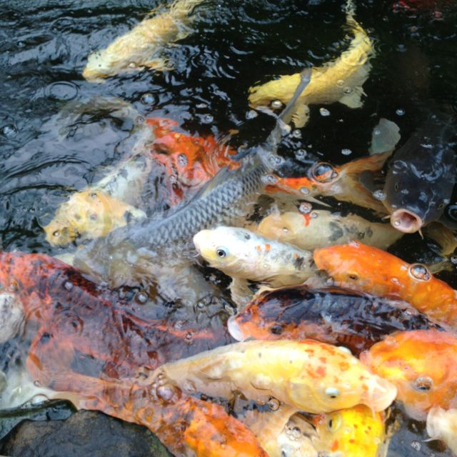 Atlanta Water Gardens :)