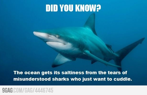 Image result for shark quotes | So true | Pinterest | Search ...