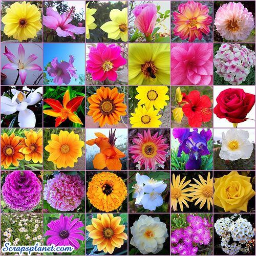 Flower Pictures, Images, Flower Scraps, Glitter Graphics