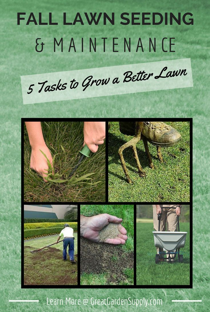 Lawn Care Tasks For The Fall Guide To Seeding Weeding Top Dressing Aerating Fertilizing Removing Thatch