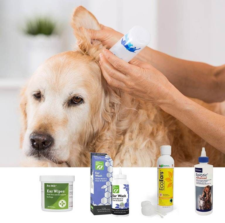 Best Dog Ear Cleaner (2020 Review) In 2020