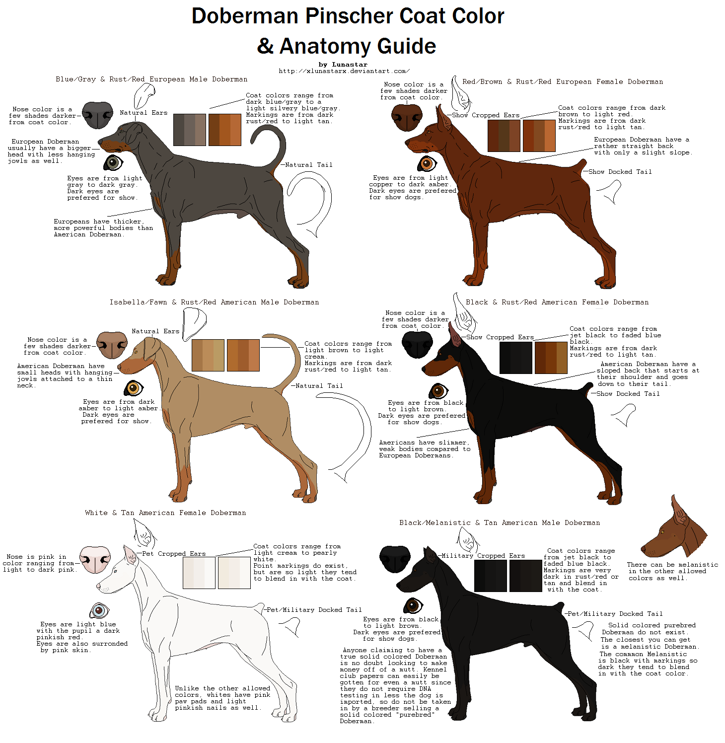 Doberman Pinscher Coat Color and Anatomy Guide by xLunastarx | Dobie ...