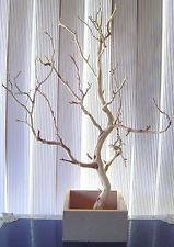 "MANZANITA CENTERPIECE BRANCHES 2 PIECES 20""- 24"" WITH WOODEN BASE..SANDBLASTED"
