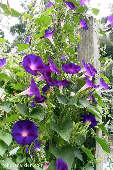 Grandpa Ott S Garden Vines Mailbox Garden Seed Starting Mix