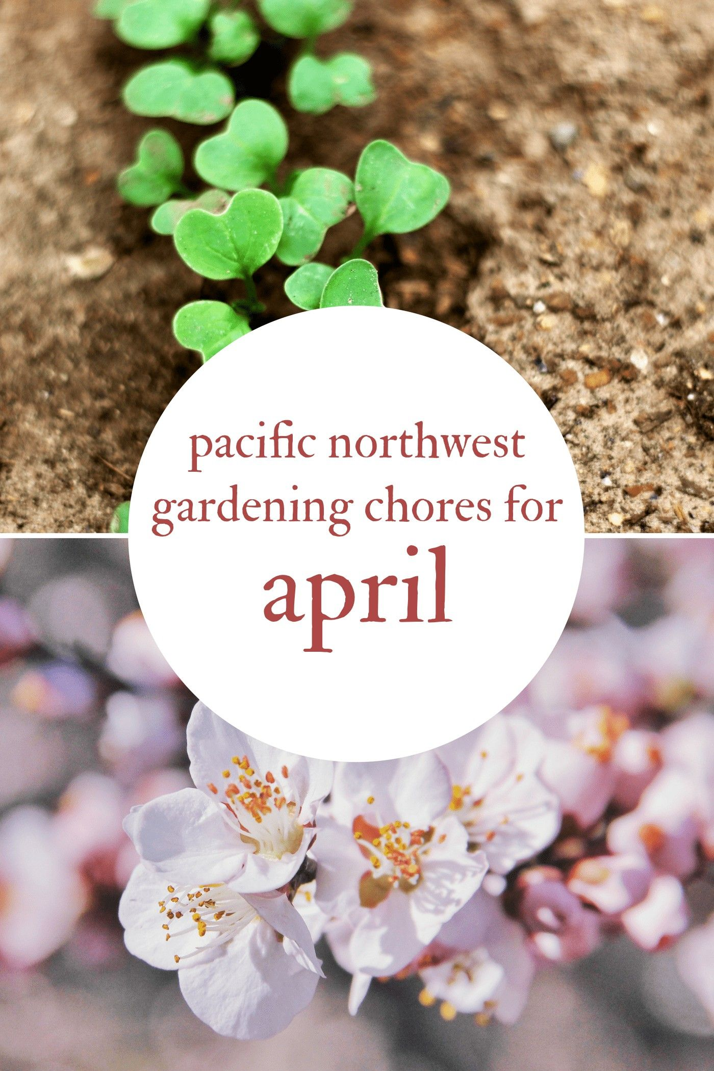 April is a month of direct sowing first harvests fast
