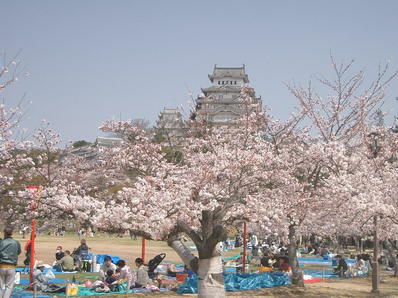 Pin By Cody Crane On Dream Home Hanami Japanese Festival Cherry Blossom