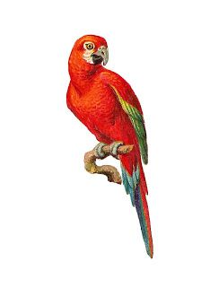antique images bird clip art red macaw on branch parrot graphic rh pinterest com Snake Clip Art Toucan Clip Art