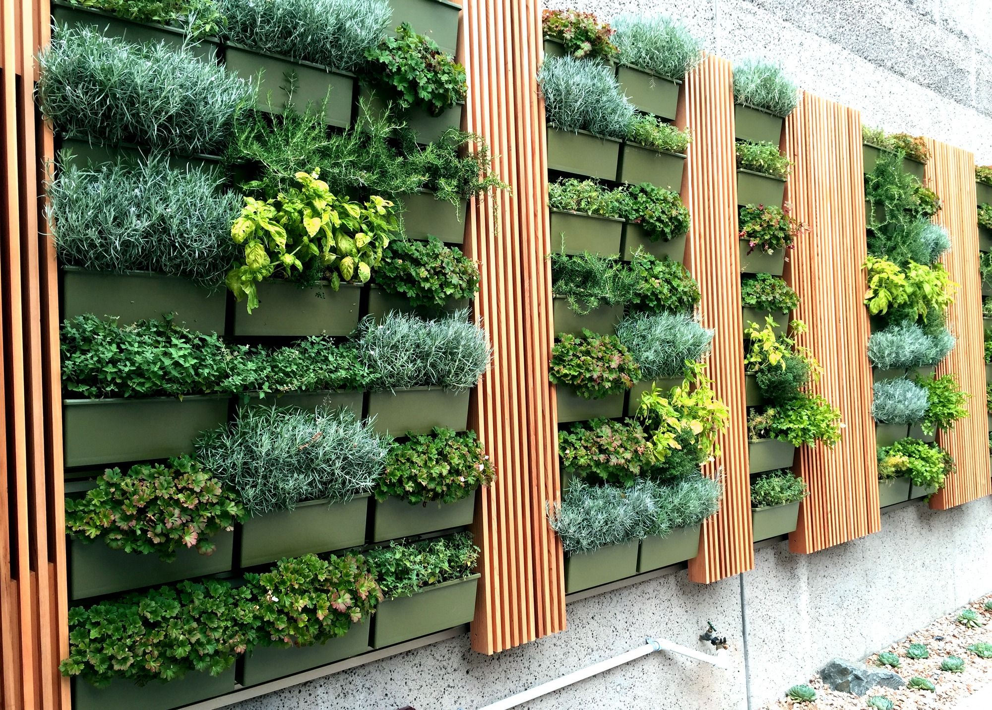 Herb Walls in San Diego. Herbs are an amazing group of ... on Back Wall Garden Ideas id=54968