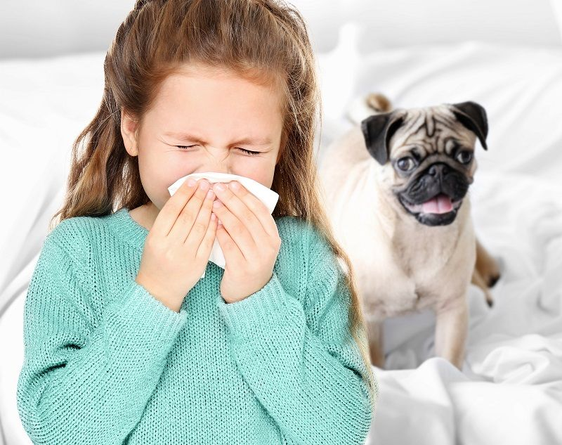 5 Common Myths about Pet Allergies Honeywell In this