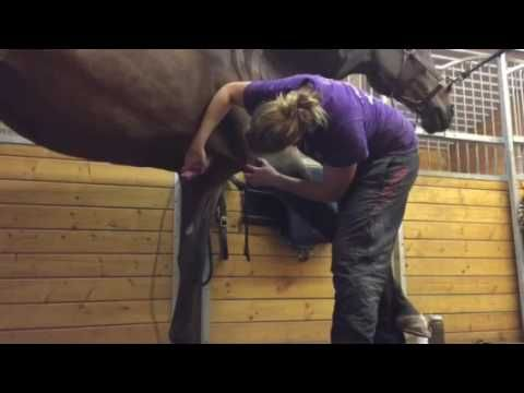 Behind the scenes of a professional horse body clipper! http://www.proequinegrooms.com/index.php/news/meet-some-grooms/meet-pro-groom-amanda-geerlinks/
