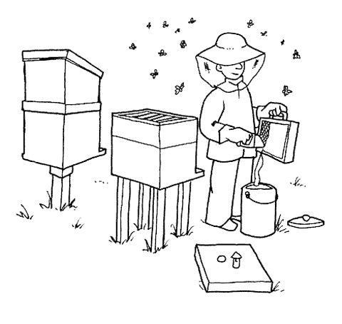Dibujos de apicultura - Imagui | abejas | Pinterest