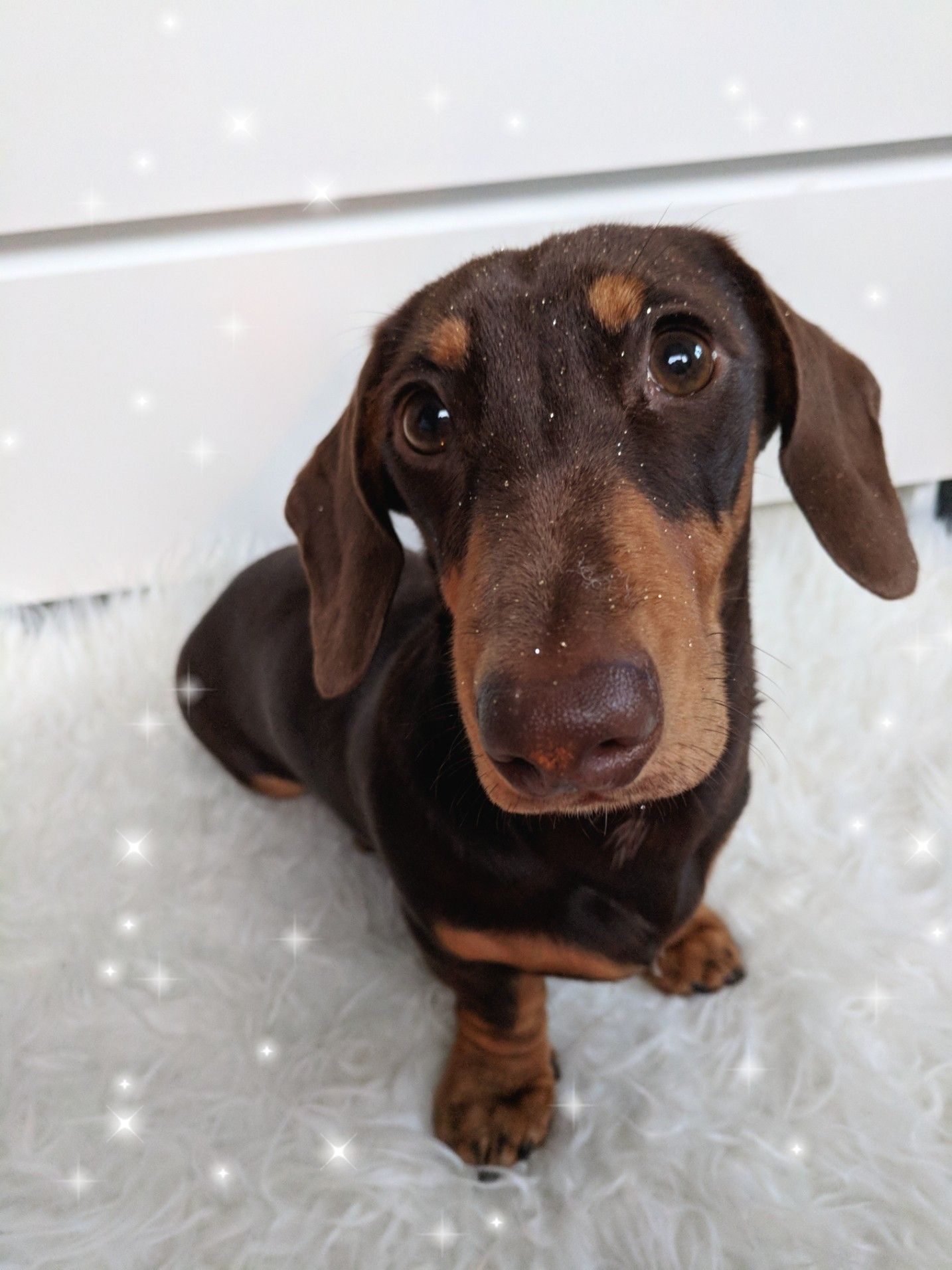 Schmitt Happenss On Instagram And Facebook Dachshund