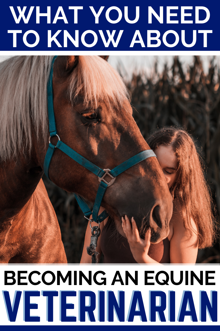 Dream Of Becoming An Equine Veterinarian Here S What You Need To Know In 2020 Equine Veterinarian Veterinarian Horse Care