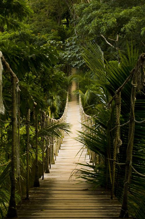 Bridge of Pirates in Gumbalimba Park, Isla Roatan, Honduras  by...