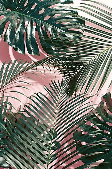 Green Tropical Leaves On A Pink Wall Palm Leaves Photographic Print By Digital Cloud In 2020 Plant Wallpaper Aesthetic Wallpapers Landscape Illustration