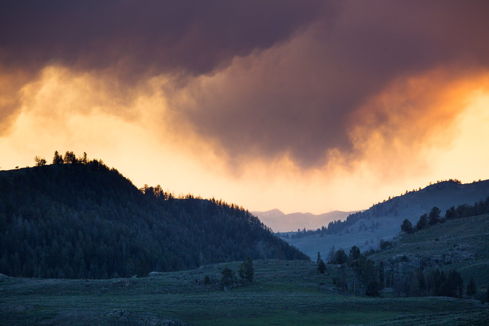 Bison snorting, cranes calling, wolves howling: what's not to love about a Lamar Valley sunset?
