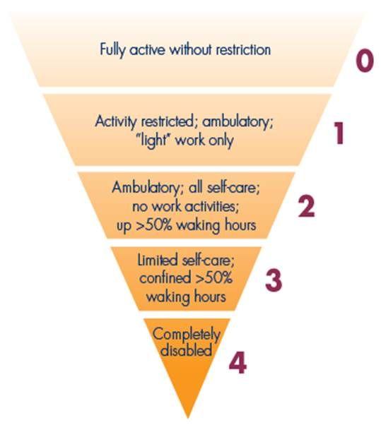 Ecog Performance Status 2 Work Activities Internal Medicine Pie Chart