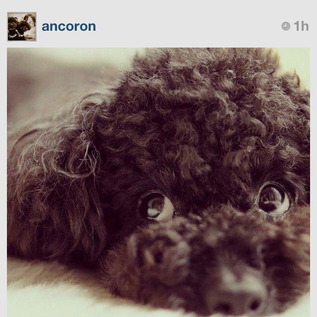 Fofinha do instagram