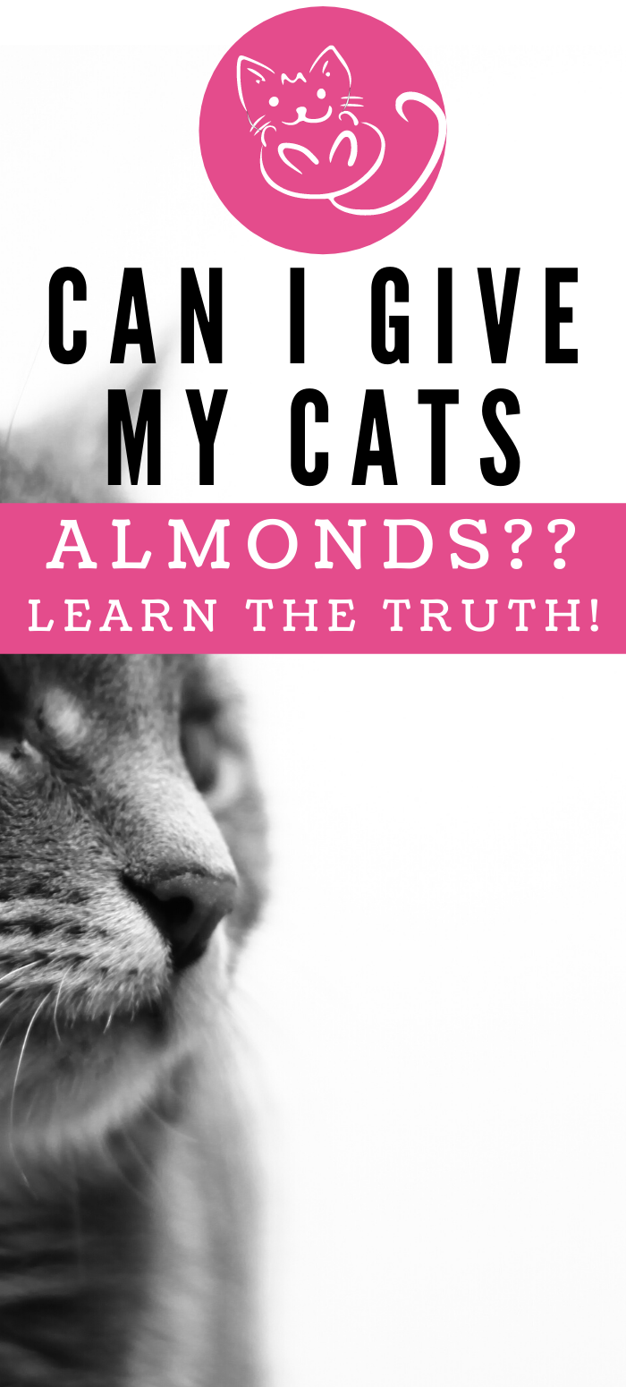 Can Cats Eat Almonds? Live Long and Pawspurr in 2020